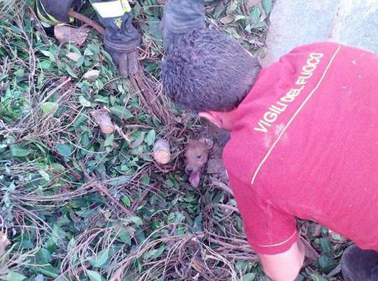 cucciolo sepolto vivo