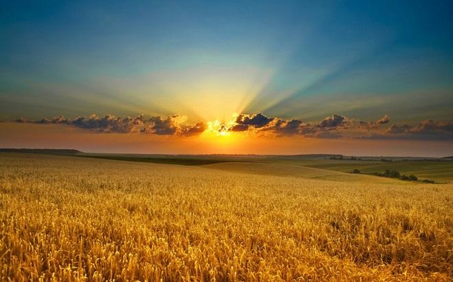 20140113-coltivazione-di-grano-accordo-barilla-coprob-660x412