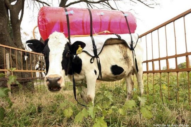 La ricerca del National Institute of Agricultural Technology di Castellar si è servita di questo serbatoi per raccogliere i gas e studiare le contromisure biochimiche e naturali