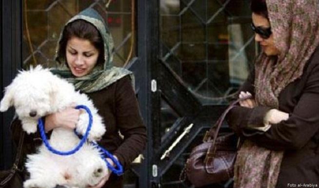 20141106-disegno-legge-contro-cani-655x387