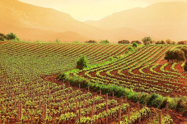20141202-agricoltura-veneto-655x436