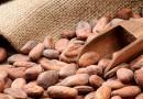 Agricoltura e clima. Dall'allarme per lo champagne alle banane siciliane in arrivo, rischi e opportunità